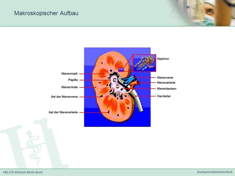 HELIOS Klinikum Berlin-Buch Nuklearmedizinische Klinik Statische Nierenszintigraphie - Zeigt nur funktionsfähiges Nierenparenchym (Die Morphologie der Nieren kann mit radiologischen Verfahren wie Sonographie, CT, MRT usw.