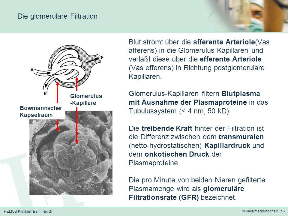 HELIOS Klinikum Berlin-Buch Nuklearmedizinische Klinik Nachweis einer renovaskulären Hypertonie Captopriltest (ACE-Hemmer) Prinzip: Nierenarterienstenose erniedrigter Blutdruck in der Niere Aktivierung des Renin-Angiotensin-Aldosteron-Mechanismus systemische Vasokonstriktion Steigerung des Perfusionsdrucks in der Niere und Anstieg des Blutdrucks durch vermehrte Na + -Rückresorption ACE (Angiotensin converting enzyme) überführt Angiotensin I in Angiotensin II.