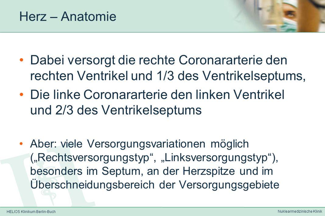 HELIOS Klinikum Berlin-Buch Nuklearmedizinische Klinik Herz – Anatomie Blutversorgung Versorgung des Endokards durch Diffusion aus dem Kammerblut Versorgung des Myokards über Herzkranzgefäße (Coronarien) direkt aus der Aorta ascendens –1/7 (des Blutvolumens) über A.coronaria dextra –6/7 (des Blutvolumens) über A.coronaria sinistra