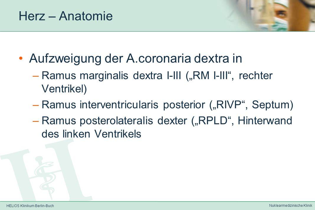 HELIOS Klinikum Berlin-Buch Nuklearmedizinische Klinik Herz – Anatomie Dabei versorgt die rechte Coronararterie den rechten Ventrikel und 1/3 des Vent