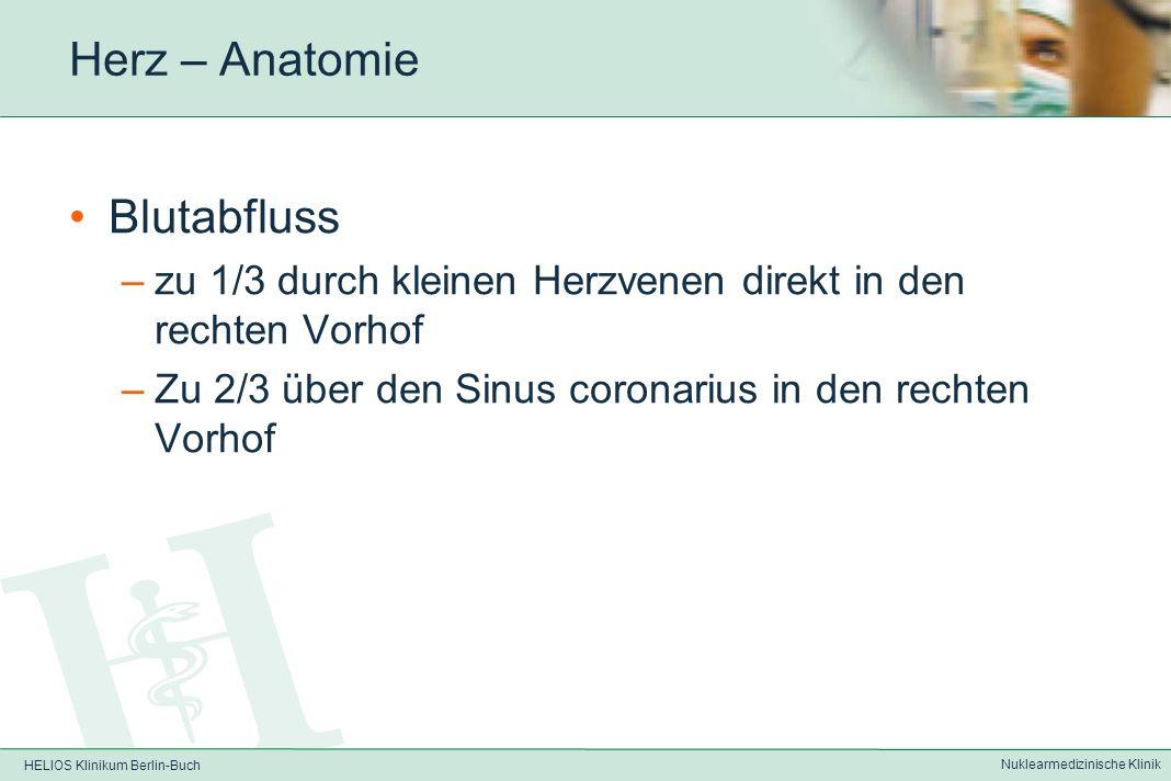 HELIOS Klinikum Berlin-Buch Nuklearmedizinische Klinik Herz – Anatomie Aufzweigung der A.coronaria sinistra in –Ramus circumflexus (RCX, Seiten- und H