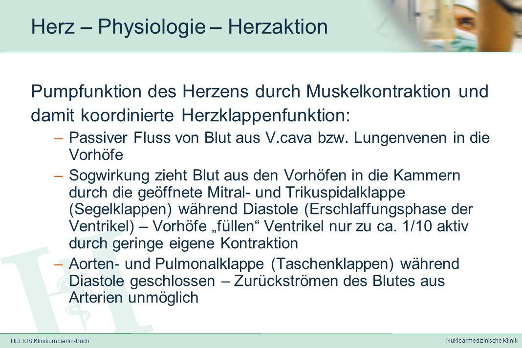 HELIOS Klinikum Berlin-Buch Nuklearmedizinische Klinik Herz – Anatomie Blutabfluss –zu 1/3 durch kleinen Herzvenen direkt in den rechten Vorhof –Zu 2/3 über den Sinus coronarius in den rechten Vorhof