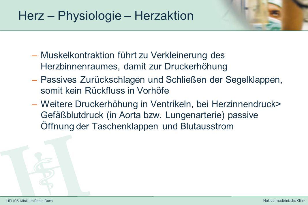 HELIOS Klinikum Berlin-Buch Nuklearmedizinische Klinik Herz – Physiologie – Herzaktion Pumpfunktion des Herzens durch Muskelkontraktion und damit koordinierte Herzklappenfunktion: –Passiver Fluss von Blut aus V.cava bzw.