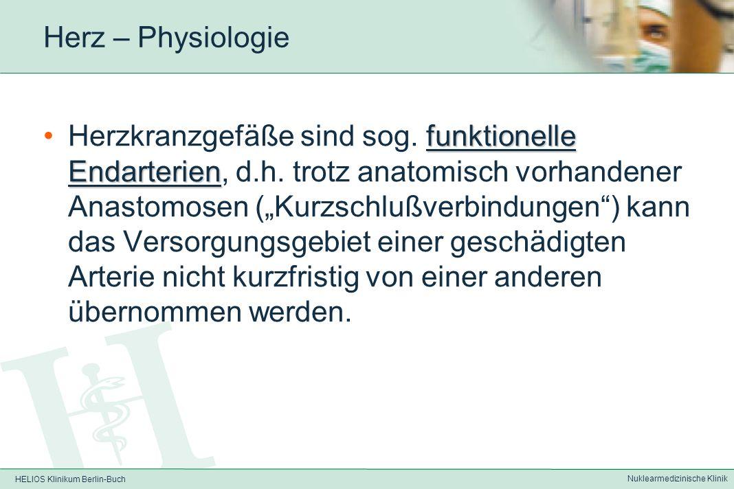 HELIOS Klinikum Berlin-Buch Nuklearmedizinische Klinik Herz – Physiologie Sauerstoffextraktion bereits in Ruhe > 75%, bei Belastung nicht wesentlich steigerbar, somit mehr Sauerstoff bei Belastung nur durch Durchblutungssteigerung erreichbar (um das bis zu 3-4fache)