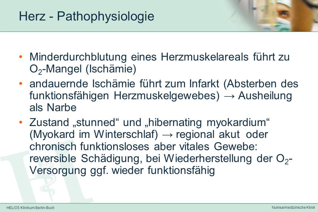 HELIOS Klinikum Berlin-Buch Nuklearmedizinische Klinik Herz – Physiologie funktionelle EndarterienHerzkranzgefäße sind sog.