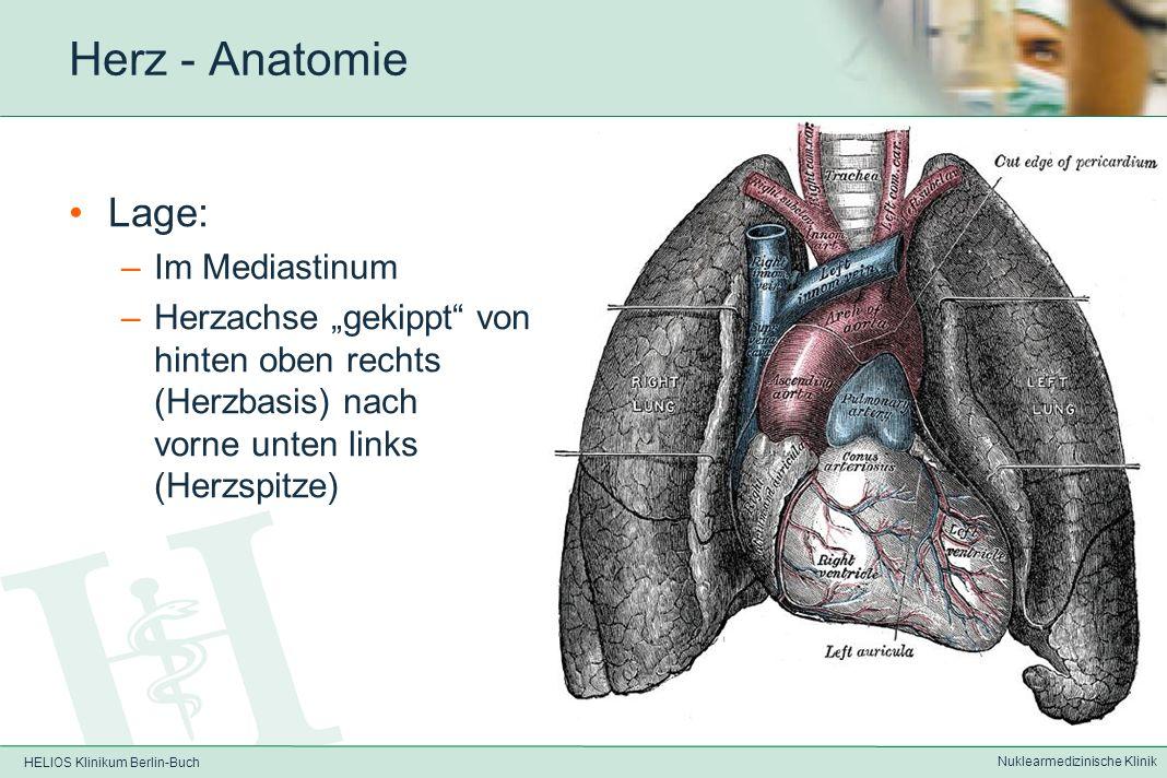 HELIOS Klinikum Berlin-Buch Nuklearmedizinische Klinik Nuklearkardiologie Anatomie des Herzens und des Kreislaufsystems Physiologie / Pathophysiologie