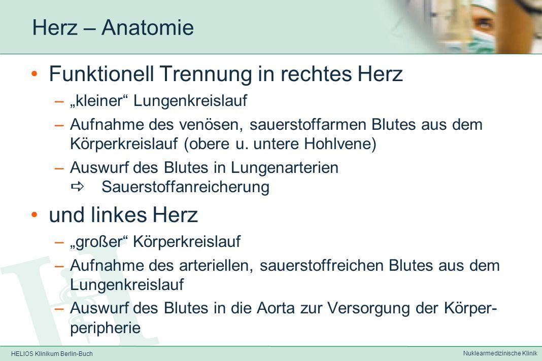HELIOS Klinikum Berlin-Buch Nuklearmedizinische Klinik Herz - Anatomie 4 Herzhöhlen –rechter Vorhof –rechter Ventrikel –linker Vorhof –linker Ventrikel (besitzt die Haupt- muskelmasse) Getrennt durch das Vorhof bzw.