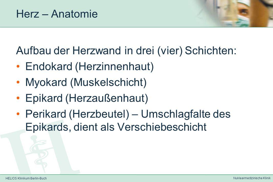 HELIOS Klinikum Berlin-Buch Nuklearmedizinische Klinik Herz – Anatomie Funktionell Trennung in rechtes Herz –kleiner Lungenkreislauf –Aufnahme des ven