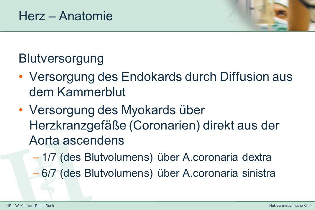 HELIOS Klinikum Berlin-Buch Nuklearmedizinische Klinik Herz – Anatomie Lagebeziehungen des Herzens: Das Herz grenzt an -die Lungenflügel (seitlich) -die großen Blutgefäße (Aorta, Pulmonalarterien und – venen, V.cava) im Mediastinum -Ösophagus im Mediastinum -Magen und Darm (kaudal) Dabei liegt der linke Ventrikel im wesentlichen dem Magen auf
