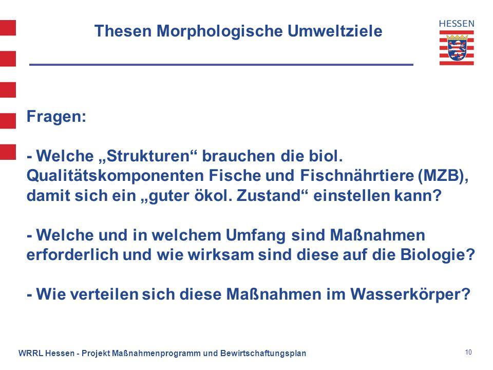 10 WRRL Hessen - Projekt Maßnahmenprogramm und Bewirtschaftungsplan Thesen Morphologische Umweltziele Fragen: - Welche Strukturen brauchen die biol. Q