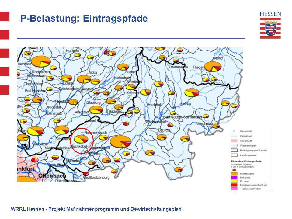 P-Belastung: Eintragspfade WRRL Hessen - Projekt Maßnahmenprogramm und Bewirtschaftungsplan