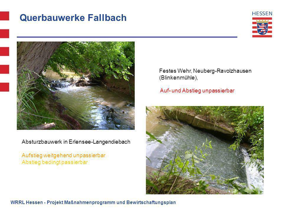 Querbauwerke Fallbach Absturzbauwerk in Erlensee-Langendiebach Festes Wehr, Neuberg-Ravolzhausen (Blinkenmühle), Aufstieg weitgehend unpassierbar Abst