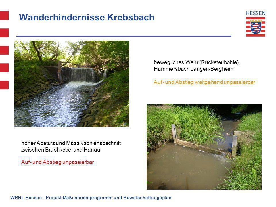 Wanderhindernisse Krebsbach hoher Absturz und Massivsohlenabschnitt zwischen Bruchköbel und Hanau bewegliches Wehr (Rückstaubohle), Hammersbach Langen