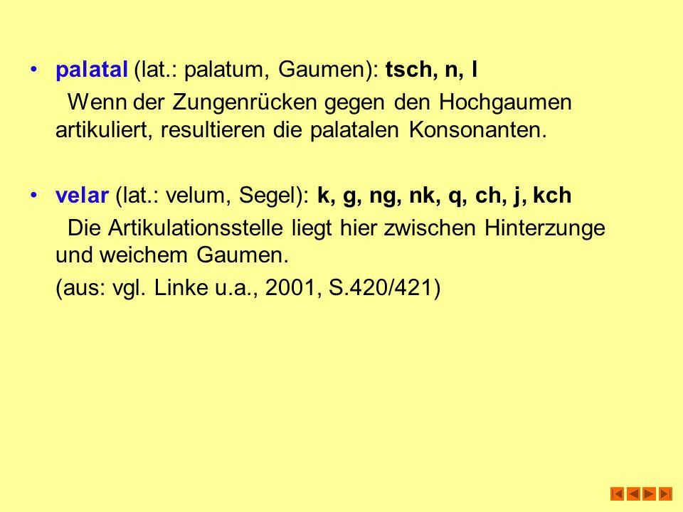 palatal (lat.: palatum, Gaumen): tsch, n, l Wenn der Zungenrücken gegen den Hochgaumen artikuliert, resultieren die palatalen Konsonanten. velar (lat.