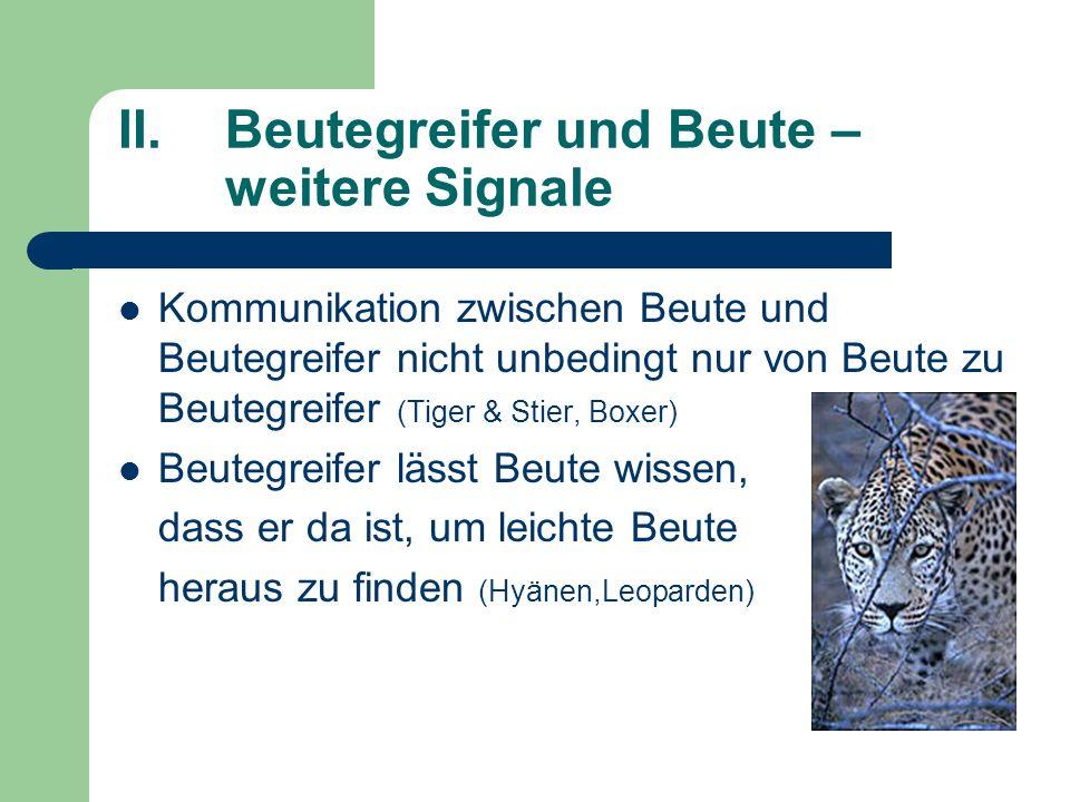II.Beutegreifer und Beute – weitere Signale Kommunikation zwischen Beute und Beutegreifer nicht unbedingt nur von Beute zu Beutegreifer (Tiger & Stier