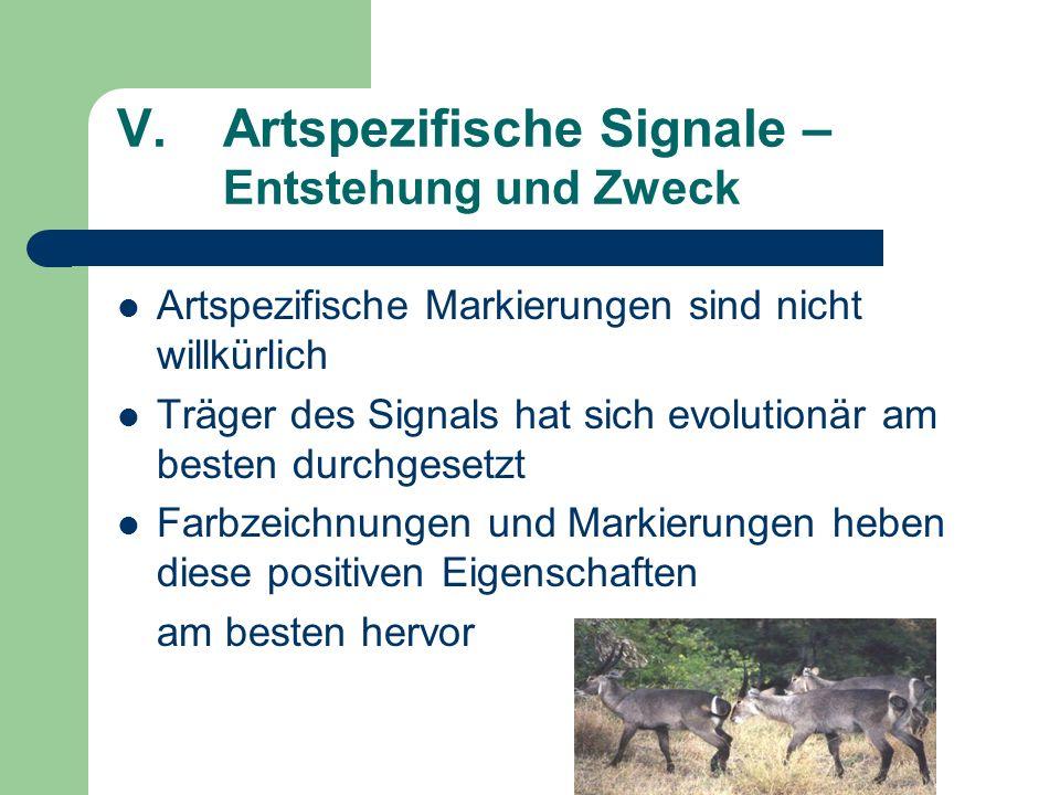 V.Artspezifische Signale – Entstehung und Zweck Artspezifische Markierungen sind nicht willkürlich Träger des Signals hat sich evolutionär am besten d