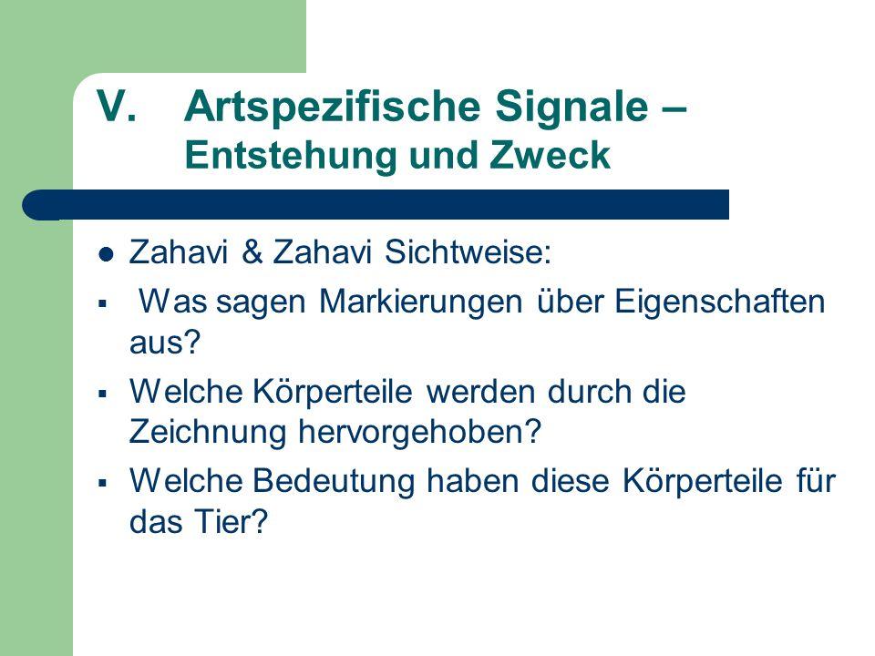 V.Artspezifische Signale – Entstehung und Zweck Zahavi & Zahavi Sichtweise: Was sagen Markierungen über Eigenschaften aus? Welche Körperteile werden d