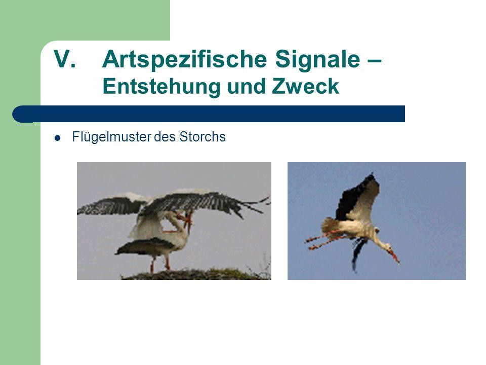 V.Artspezifische Signale – Entstehung und Zweck Flügelmuster des Storchs