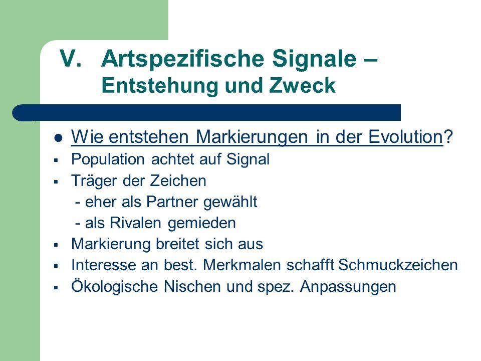 V.Artspezifische Signale – Entstehung und Zweck Wie entstehen Markierungen in der Evolution? Population achtet auf Signal Träger der Zeichen - eher al