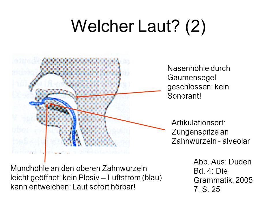Welcher Laut? (2) Nasenhöhle durch Gaumensegel geschlossen: kein Sonorant! Mundhöhle an den oberen Zahnwurzeln leicht geöffnet: kein Plosiv – Luftstro