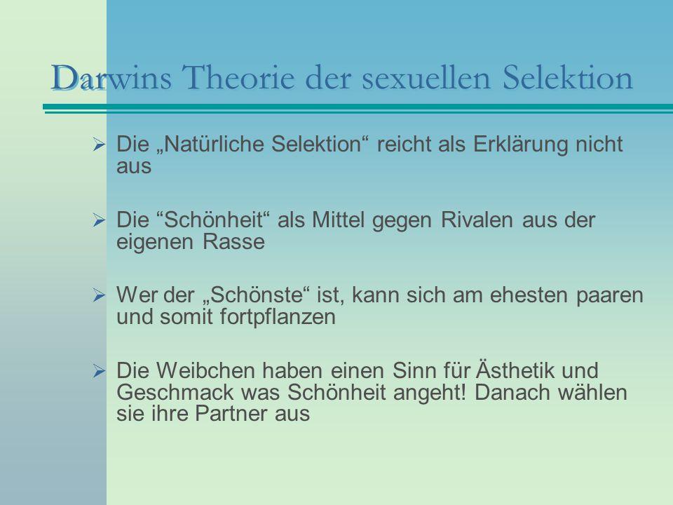 Darwins Theorie der sexuellen Selektion Die Natürliche Selektion reicht als Erklärung nicht aus Die Schönheit als Mittel gegen Rivalen aus der eigenen