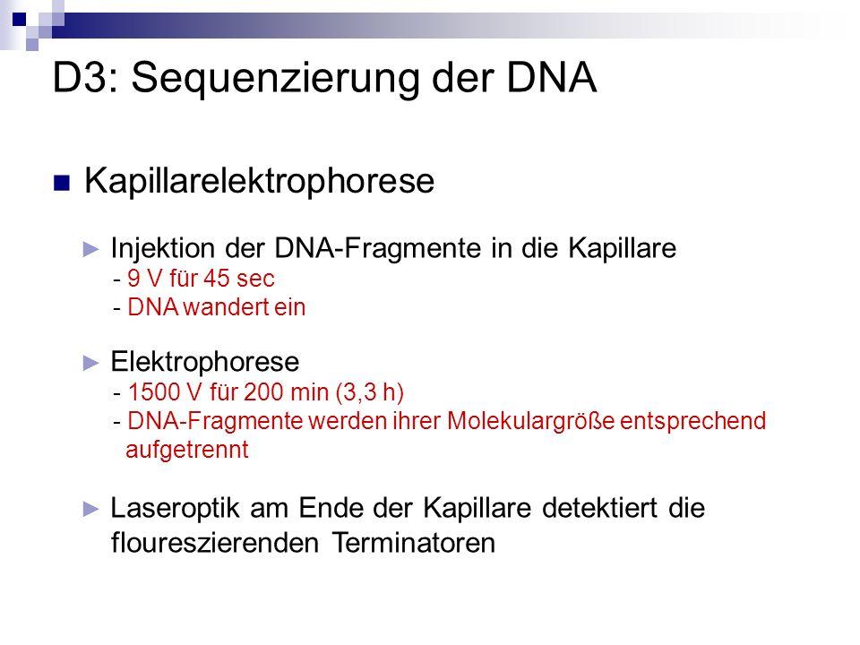Kapillarelektrophorese D3: Sequenzierung der DNA Laseroptik am Ende der Kapillare detektiert die floureszierenden Terminatoren Injektion der DNA-Fragm
