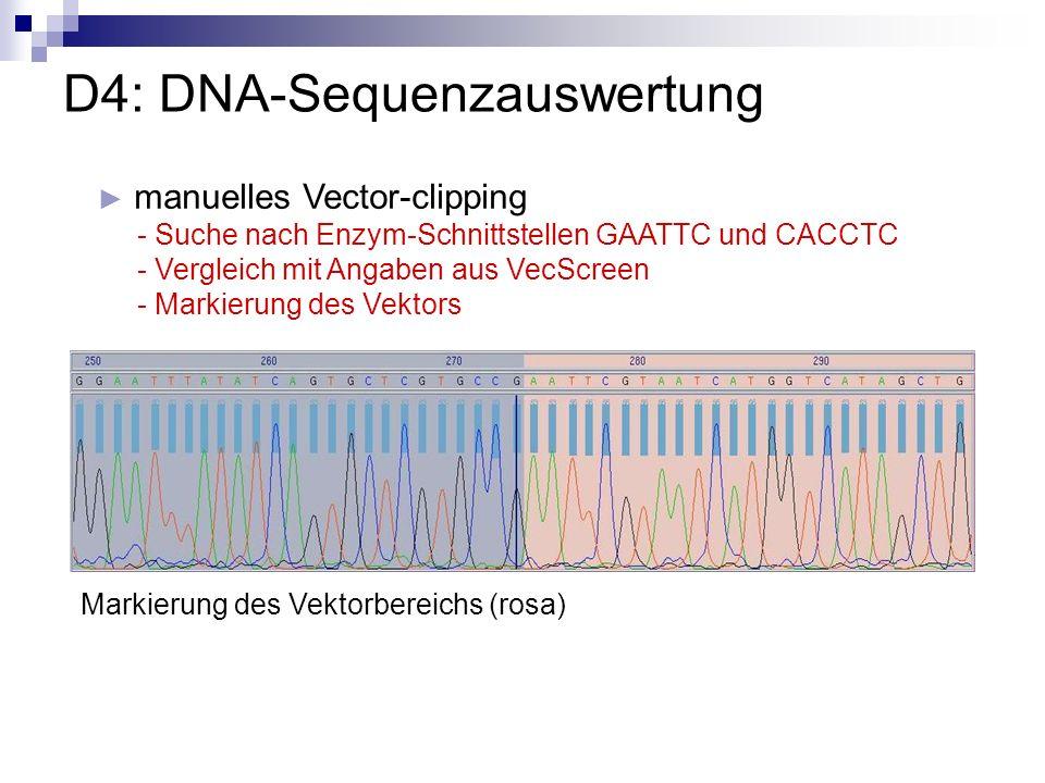 D4: DNA-Sequenzauswertung manuelles Vector-clipping - Suche nach Enzym-Schnittstellen GAATTC und CACCTC - Vergleich mit Angaben aus VecScreen - Markie