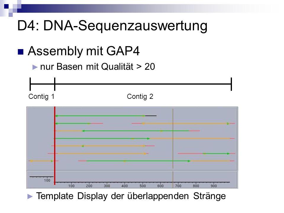 D4: DNA-Sequenzauswertung Template Display der überlappenden Stränge Contig 1Contig 2 Assembly mit GAP4 nur Basen mit Qualität > 20