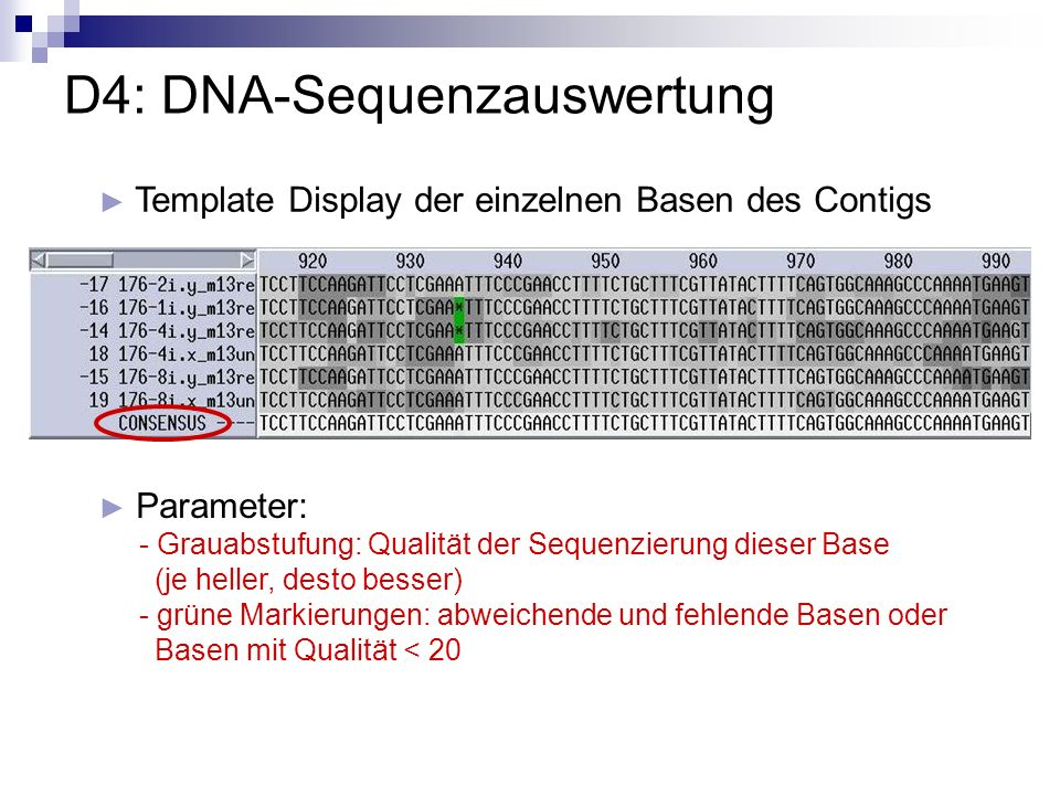 D4: DNA-Sequenzauswertung Template Display der einzelnen Basen des Contigs Parameter: - Grauabstufung: Qualität der Sequenzierung dieser Base (je hell