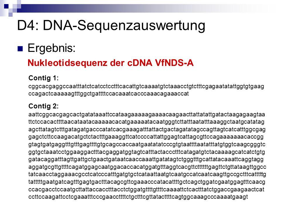 D4: DNA-Sequenzauswertung Ergebnis: Nukleotidsequenz der cDNA VfNDS-A Contig 1: cggcacgaggccaatttatctcatcctcctttcacattgtcaaaatgtctaaacctgtctttcgagaata