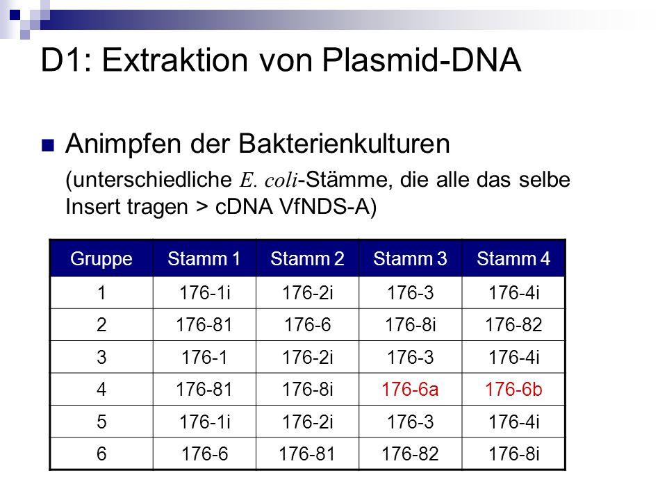 Lysat mittels Puffer3 (sauer) neutralisieren und abzentrifugieren Plasmid-DNA renaturiert und gelöst, chromosomale DNA und Proteine pelletiert Zellen durch Zugabe von Puffer2 (alkalisch) lysieren Denaturierung der chromosomalen und Plasmid-DNA Angezogene Zellen abzentrifugieren und in Puffer1 (RNAse-haltig) resuspendieren RNA wird hydrolisiert D1: Extraktion von Plasmid-DNA DNA-Gewinnung