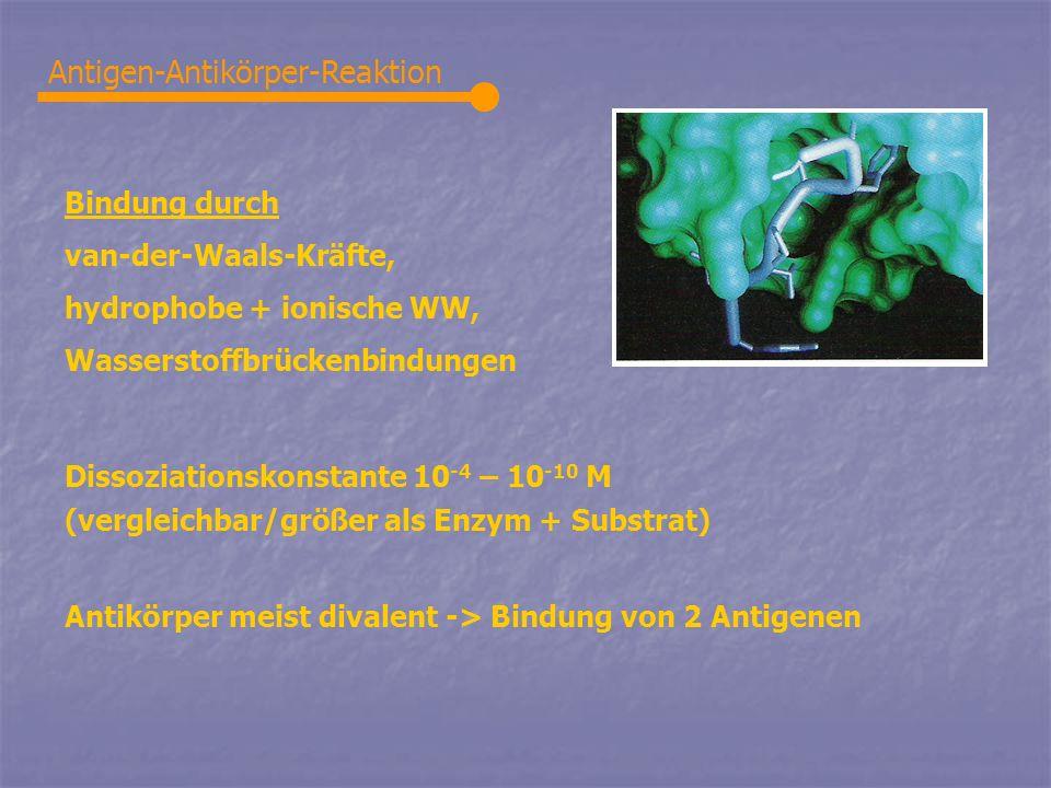 Antigen-Antikörper-Reaktion Bindung durch van-der-Waals-Kräfte, hydrophobe + ionische WW, Wasserstoffbrückenbindungen Dissoziationskonstante 10 -4 – 1
