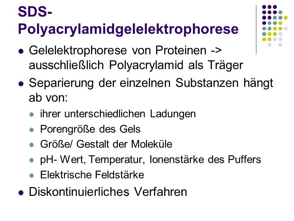 SDS- Polyacrylamidgelelektrophorese Gelelektrophorese von Proteinen -> ausschließlich Polyacrylamid als Träger Separierung der einzelnen Substanzen hä