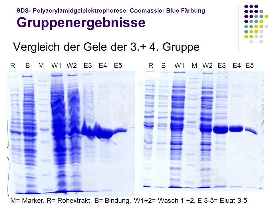 SDS- Polyacrylamidgelelektrophorese, Coomassie- Blue Färbung Gruppenergebnisse Vergleich der Gele der 3.+ 4. Gruppe E4 W2 W1 BBMME3 M= Marker, R= Rohe