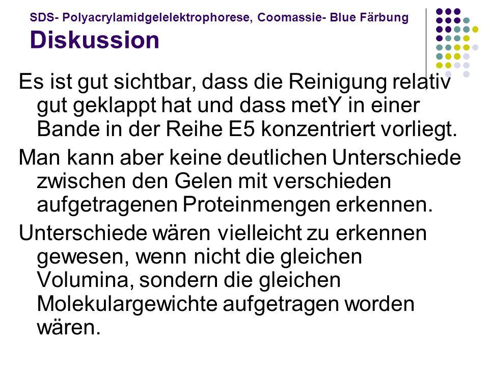 SDS- Polyacrylamidgelelektrophorese, Coomassie- Blue Färbung Diskussion Es ist gut sichtbar, dass die Reinigung relativ gut geklappt hat und dass metY