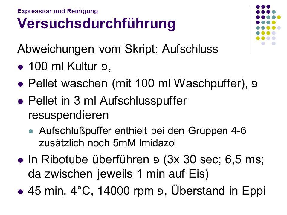 Expression und Reinigung Versuchsdurchführung Abweichungen vom Skript: B) Wasch I: 5 mM=> 0,2 ml C) Wasch II: 10 mM=> 0,4 ml D) Eluat III: 50 mM=> 2 ml E) Eluat IV: 150 mM=> 6 ml F) Eluat V: 250 mM=> 10 ml Auf je 10 ml mit Aufschlußpuffer auffüllen