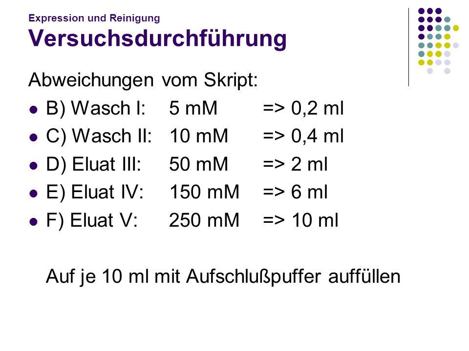 Expression und Reinigung Versuchsdurchführung Abweichungen vom Skript: B) Wasch I: 5 mM=> 0,2 ml C) Wasch II: 10 mM=> 0,4 ml D) Eluat III: 50 mM=> 2 m