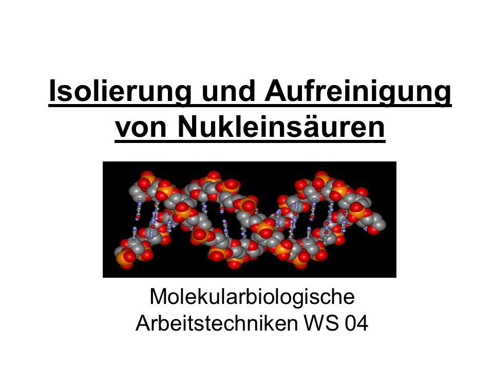 Isolierung und Aufreinigung von Nukleinsäuren Molekularbiologische Arbeitstechniken WS 04
