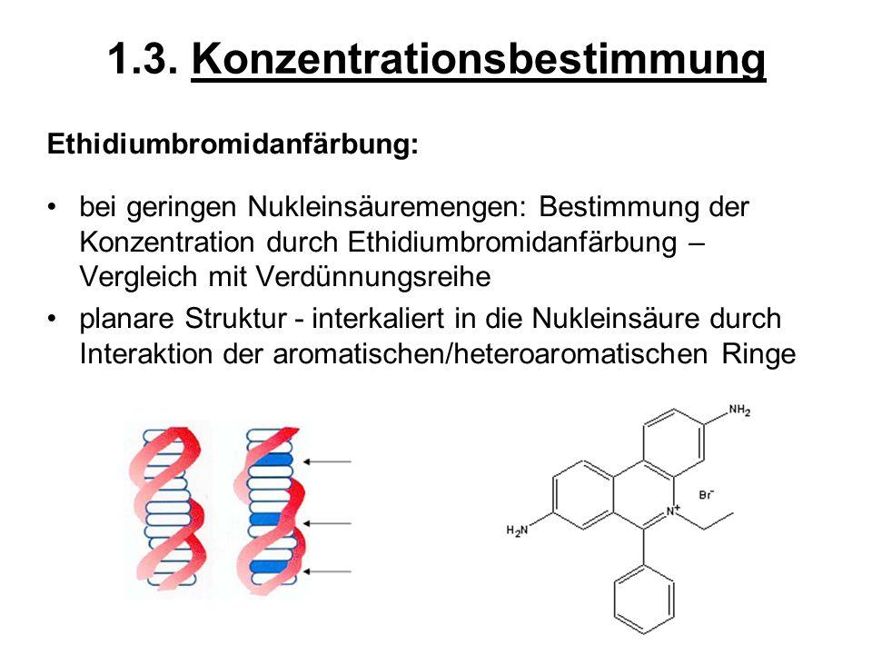 1.3. Konzentrationsbestimmung Ethidiumbromidanfärbung: bei geringen Nukleinsäuremengen: Bestimmung der Konzentration durch Ethidiumbromidanfärbung – V