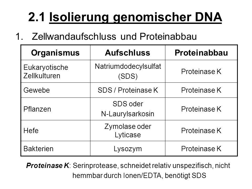 2.1 Isolierung genomischer DNA 1.Zellwandaufschluss und Proteinabbau OrganismusAufschlussProteinabbau Eukaryotische Zellkulturen Natriumdodecylsulfat