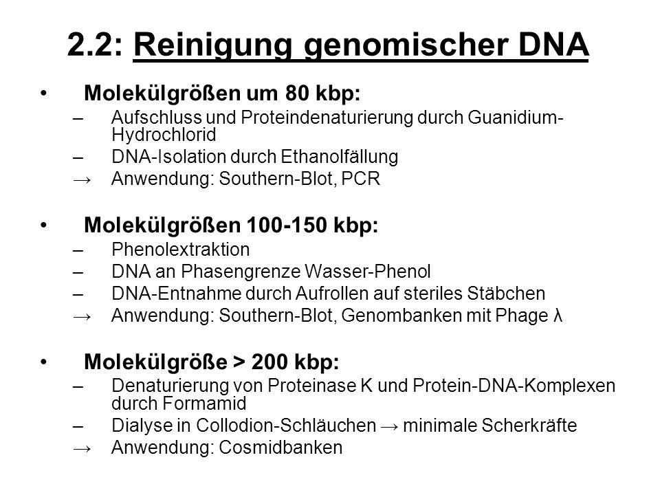 Molekülgrößen um 80 kbp: –Aufschluss und Proteindenaturierung durch Guanidium- Hydrochlorid –DNA-Isolation durch Ethanolfällung Anwendung: Southern-Bl