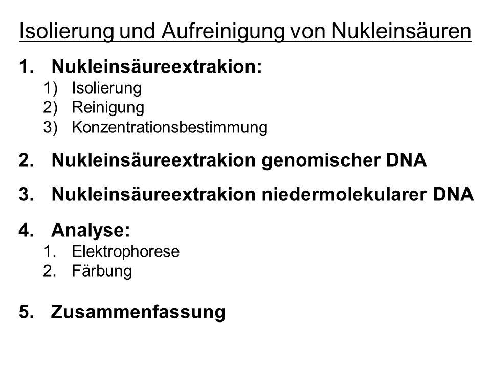 Isolierung und Aufreinigung von Nukleinsäuren 1.Nukleinsäureextrakion: 1)Isolierung 2)Reinigung 3)Konzentrationsbestimmung 2.Nukleinsäureextrakion gen