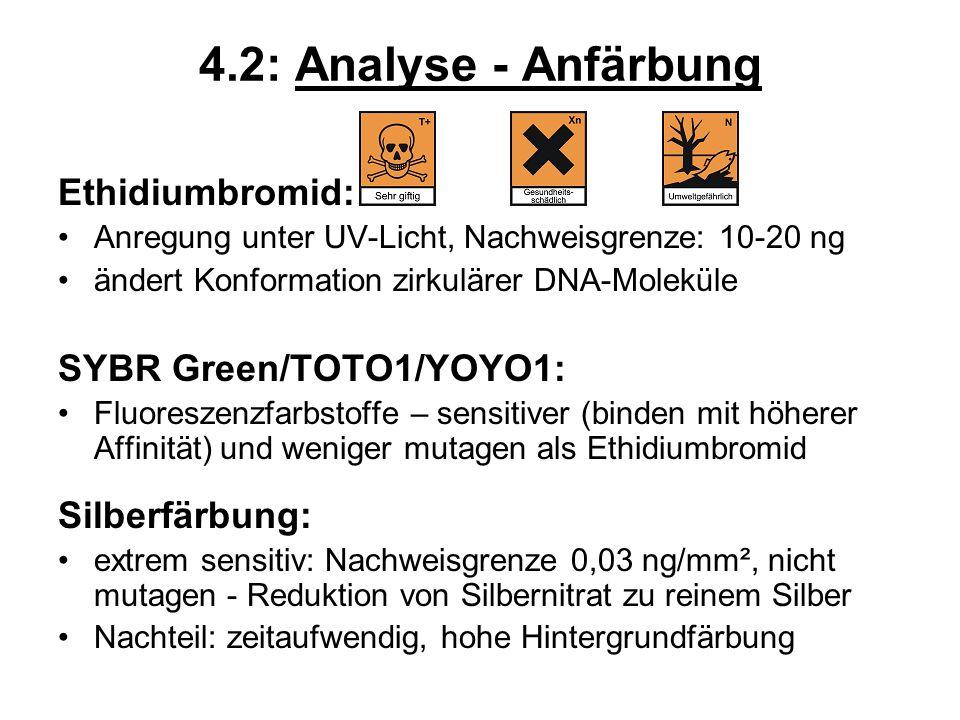 4.2: Analyse - Anfärbung Ethidiumbromid: Anregung unter UV-Licht, Nachweisgrenze: 10-20 ng ändert Konformation zirkulärer DNA-Moleküle SYBR Green/TOTO