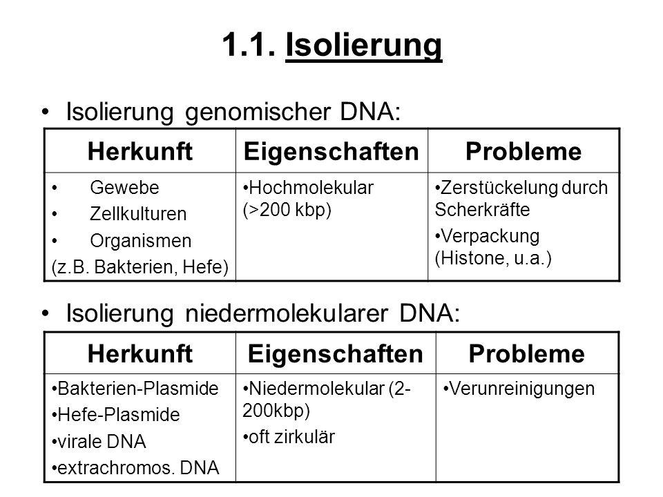 1.1. Isolierung Isolierung genomischer DNA: Isolierung niedermolekularer DNA: HerkunftEigenschaftenProbleme Gewebe Zellkulturen Organismen (z.B. Bakte