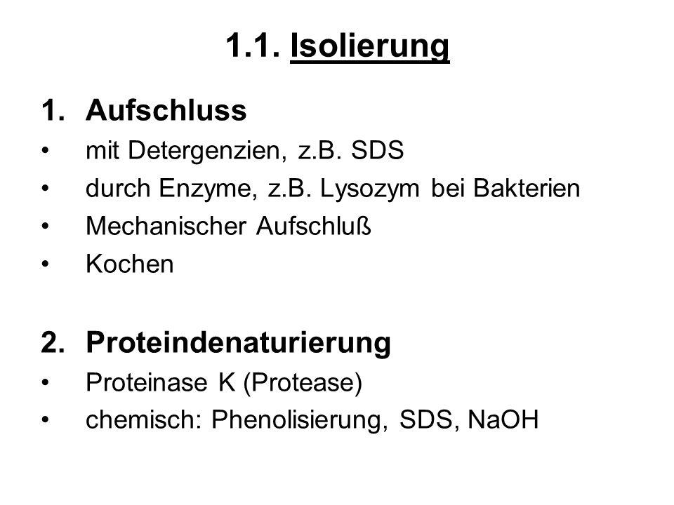 1.1. Isolierung 1.Aufschluss mit Detergenzien, z.B. SDS durch Enzyme, z.B. Lysozym bei Bakterien Mechanischer Aufschluß Kochen 2.Proteindenaturierung