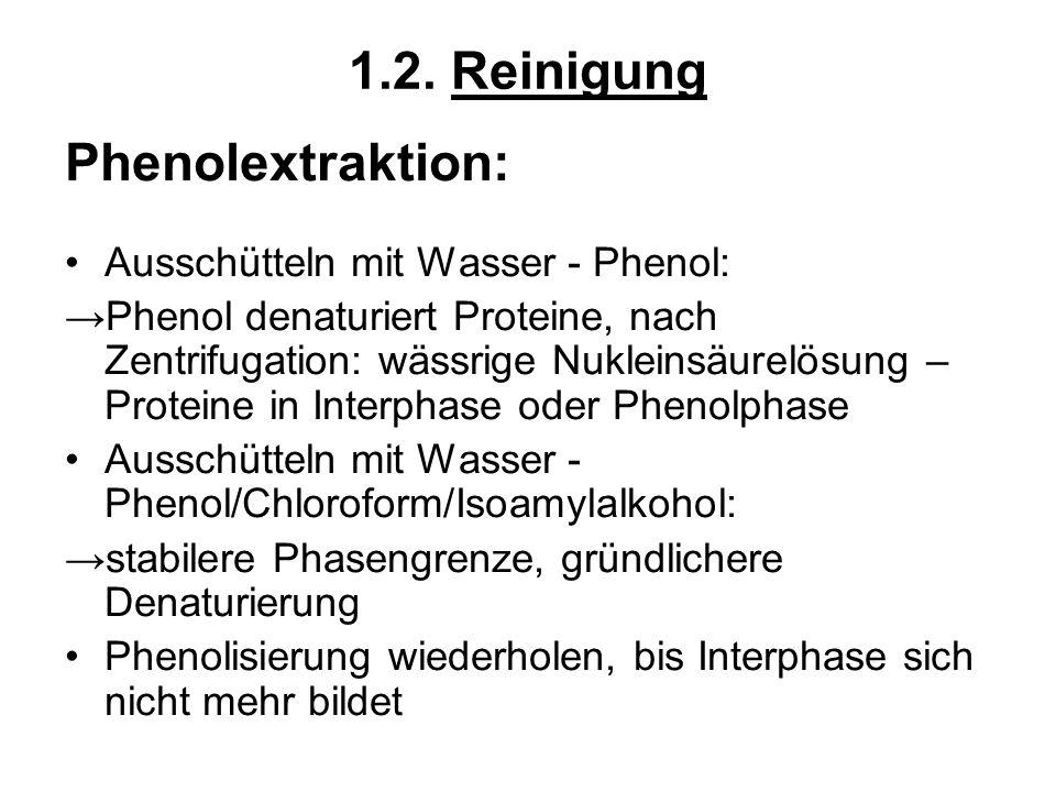 1.2. Reinigung Phenolextraktion: Ausschütteln mit Wasser - Phenol: Phenol denaturiert Proteine, nach Zentrifugation: wässrige Nukleinsäurelösung – Pro