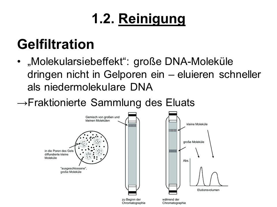 1.2. Reinigung Gelfiltration Molekularsiebeffekt: große DNA-Moleküle dringen nicht in Gelporen ein – eluieren schneller als niedermolekulare DNA Frakt
