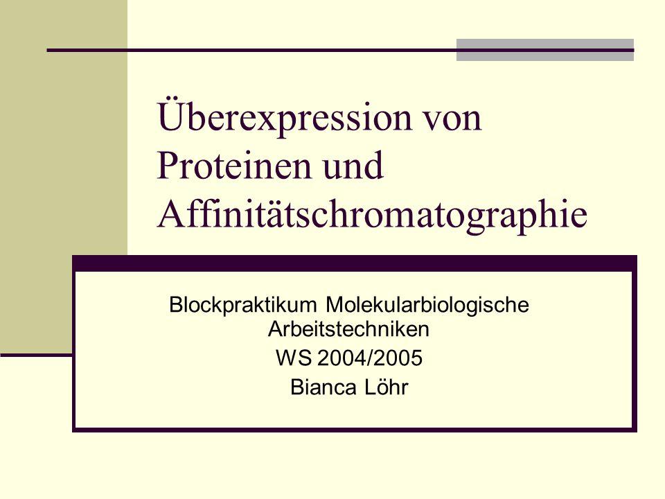 Überexpression von Proteinen und Affinitätschromatographie Blockpraktikum Molekularbiologische Arbeitstechniken WS 2004/2005 Bianca Löhr