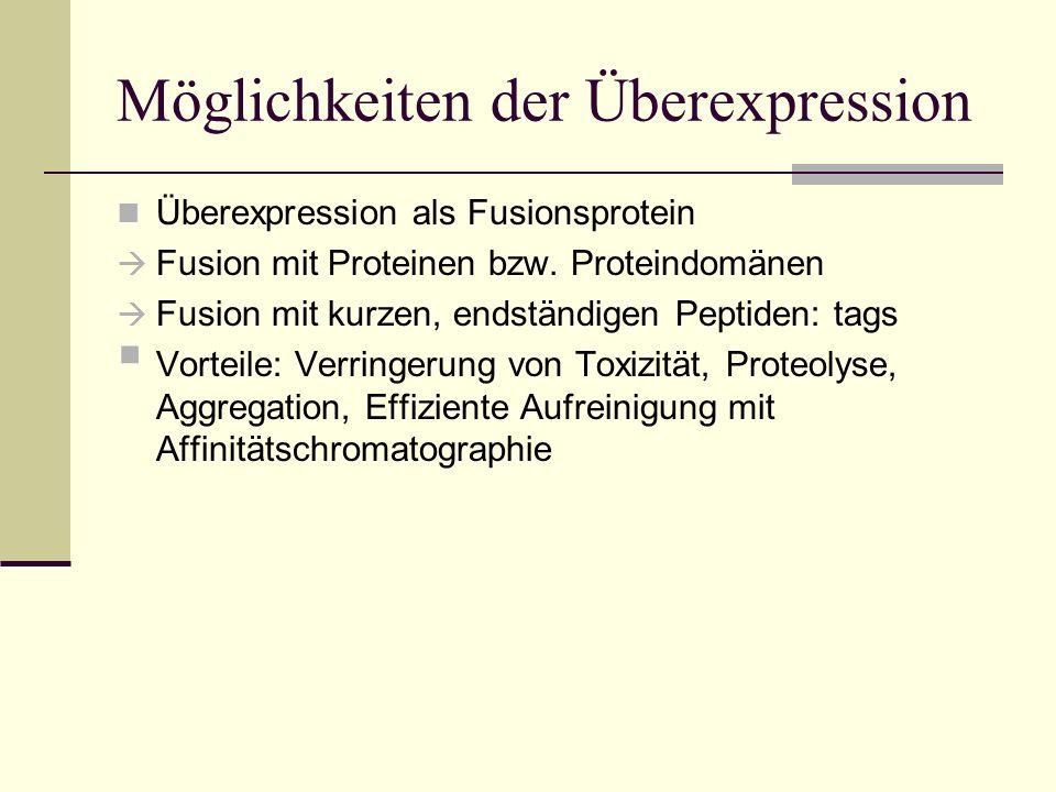Möglichkeiten der Überexpression Überexpression als Fusionsprotein Fusion mit Proteinen bzw. Proteindomänen Fusion mit kurzen, endständigen Peptiden:
