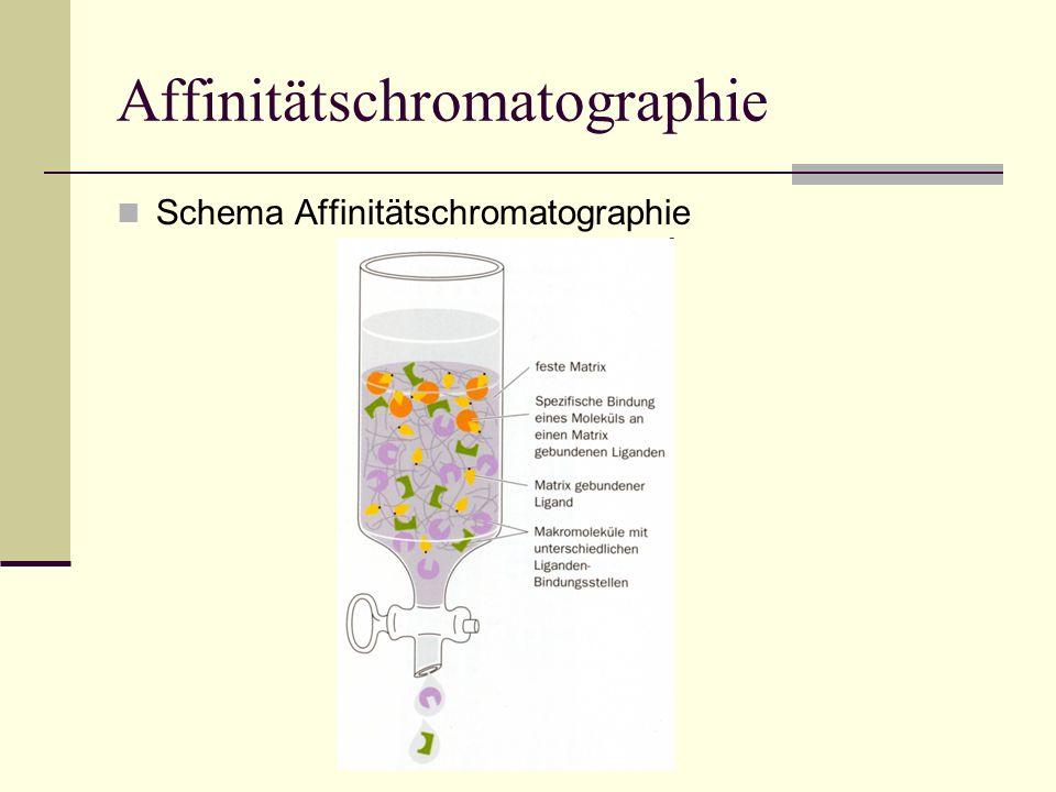 Affinitätschromatographie Schema Affinitätschromatographie